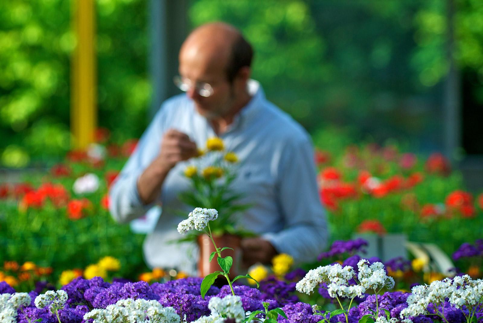 Fleurs des Cévennes - Prise de vue et création de sites internet par Index LD