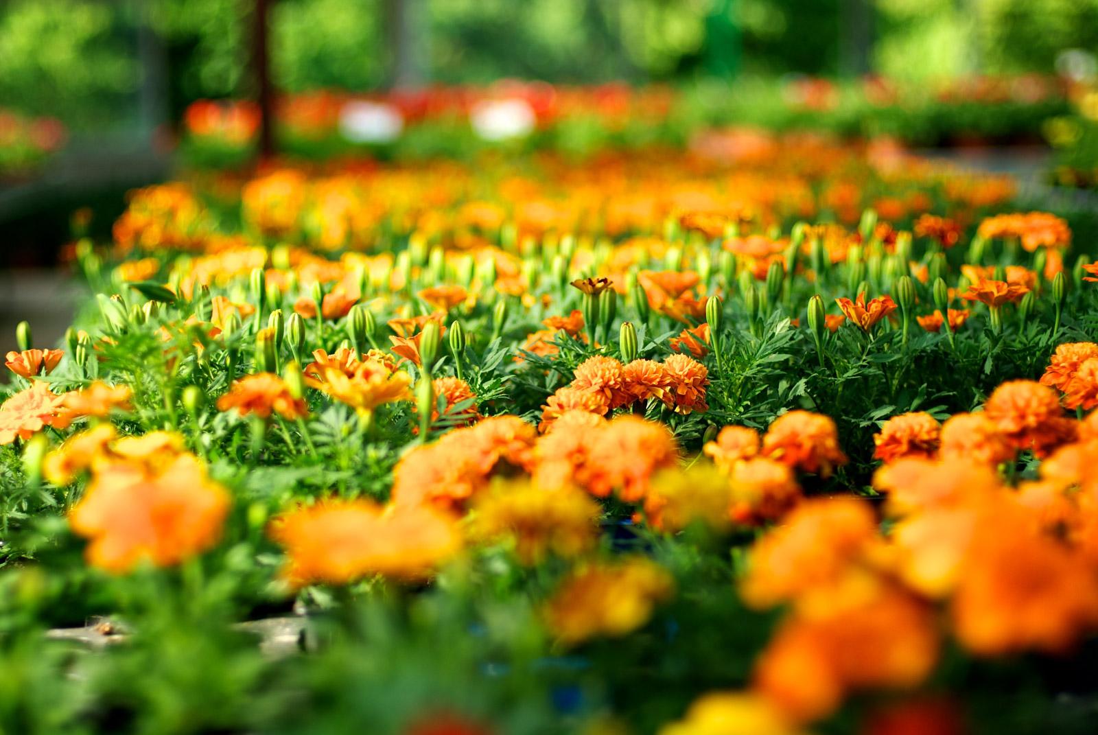 Fleurs des Cévennes