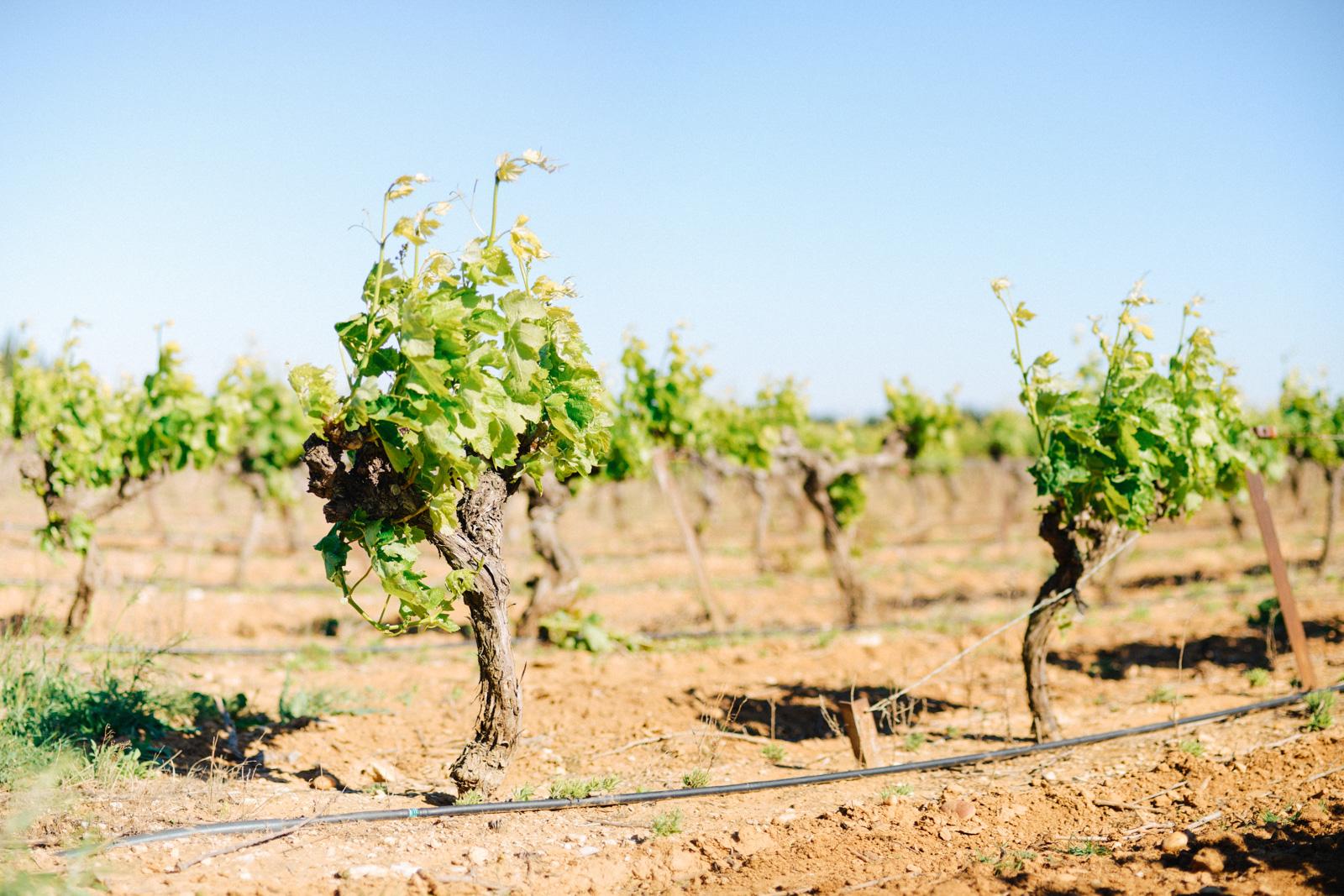 Prestations d'oenologie sur le Gard et l'Hérault
