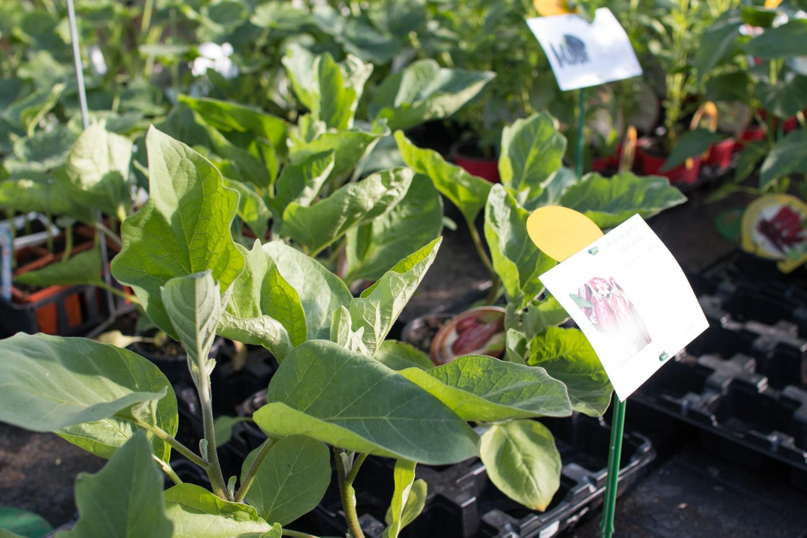 Jardinerie et pépinière