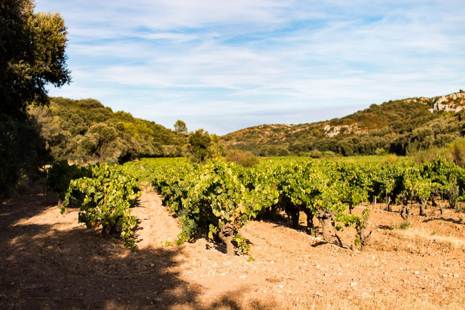 Rocca Maura - Vente en ligne de vins Bios, Côtes-du-Rhône, Lirac, Tavel...