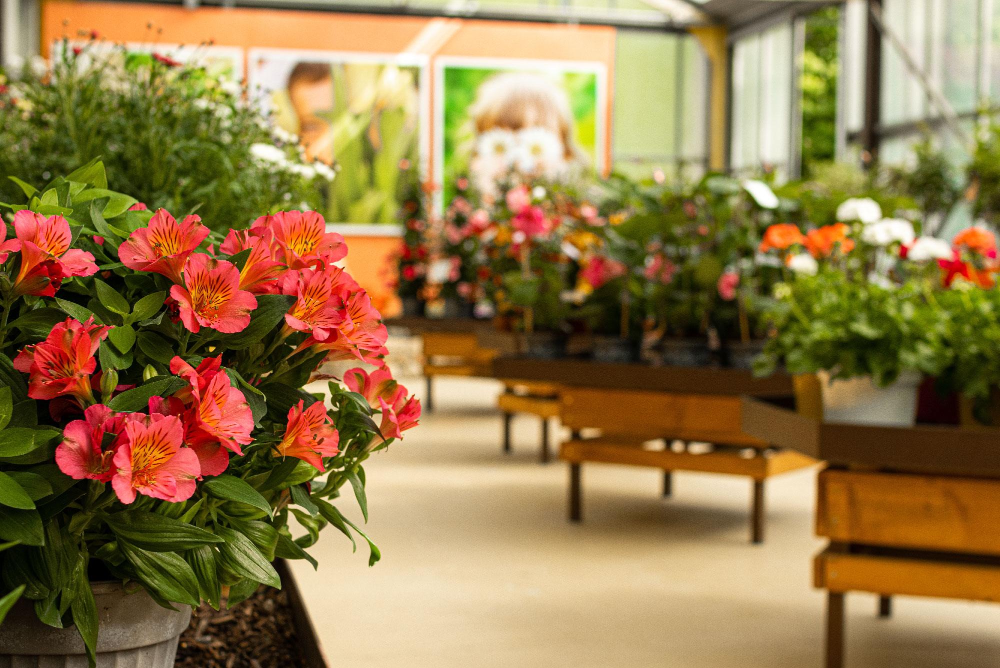 Production de fleurs et de plantes à Saint Jean du Gard