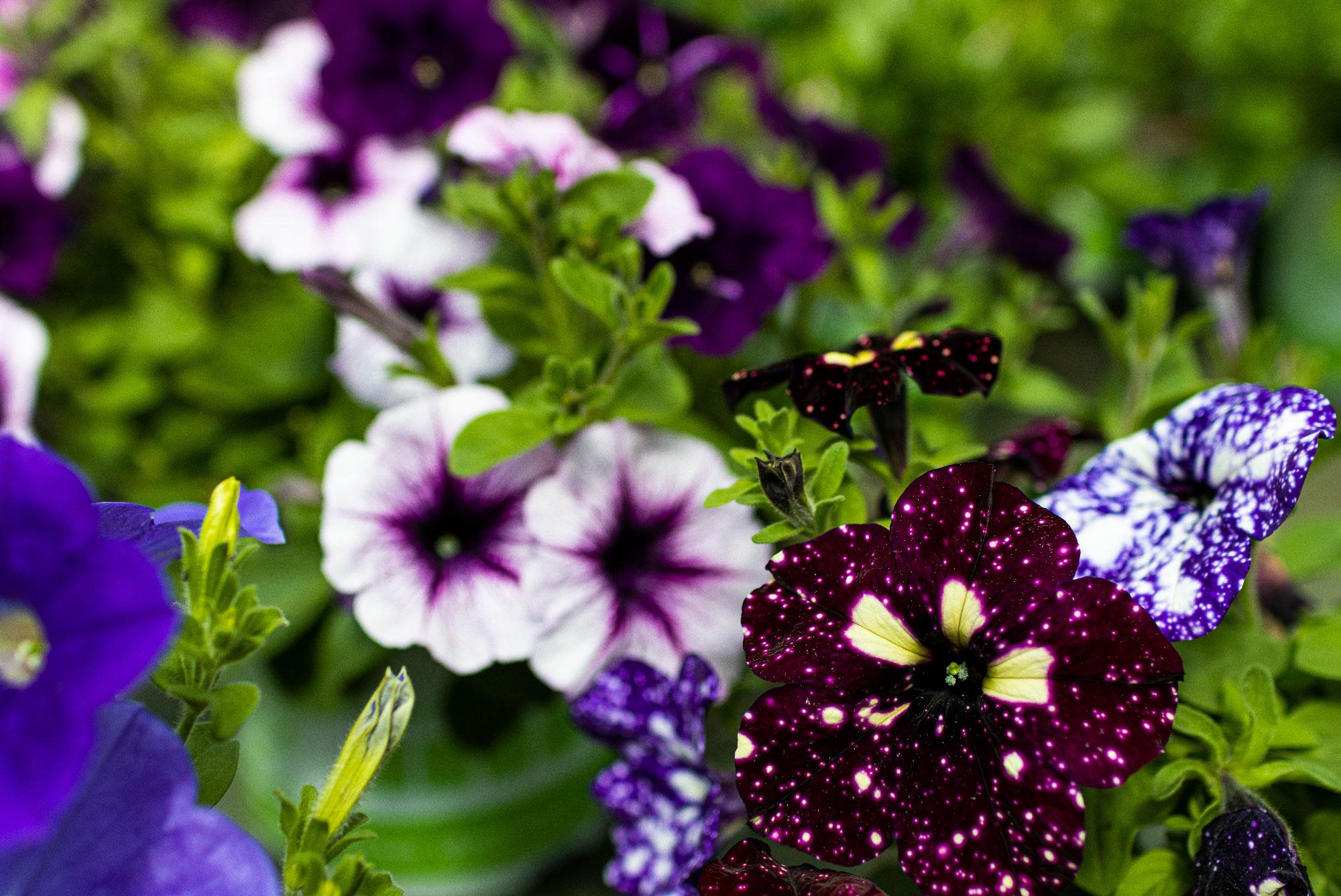 Développement de fleurs dans les Cévennes