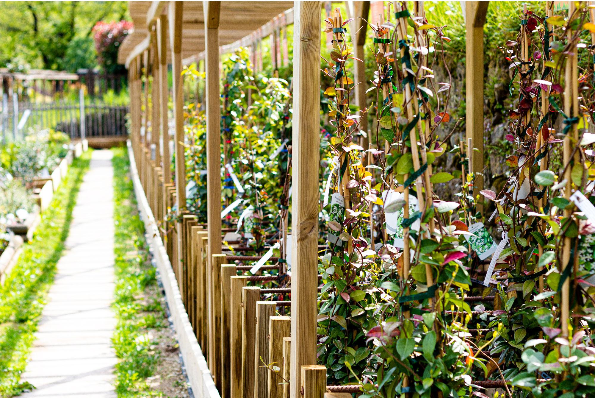 Serre et jardins Fleurs des Cévennes dans le Gard