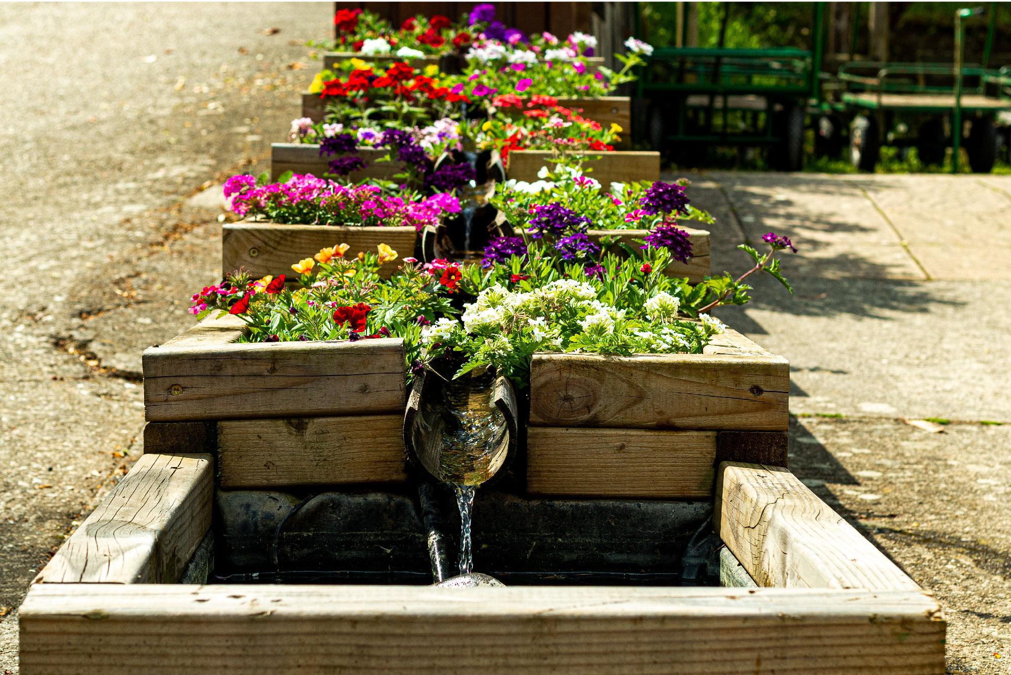 Serre et jardins à Saint Jean du Gard
