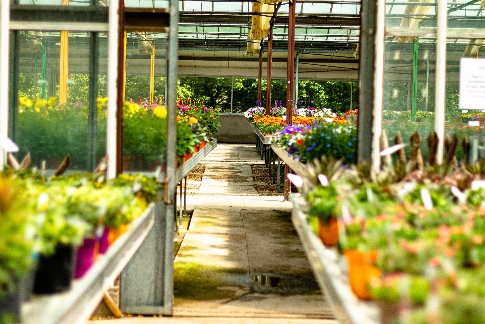 Fleurs et plantes produites dans les Cévennes