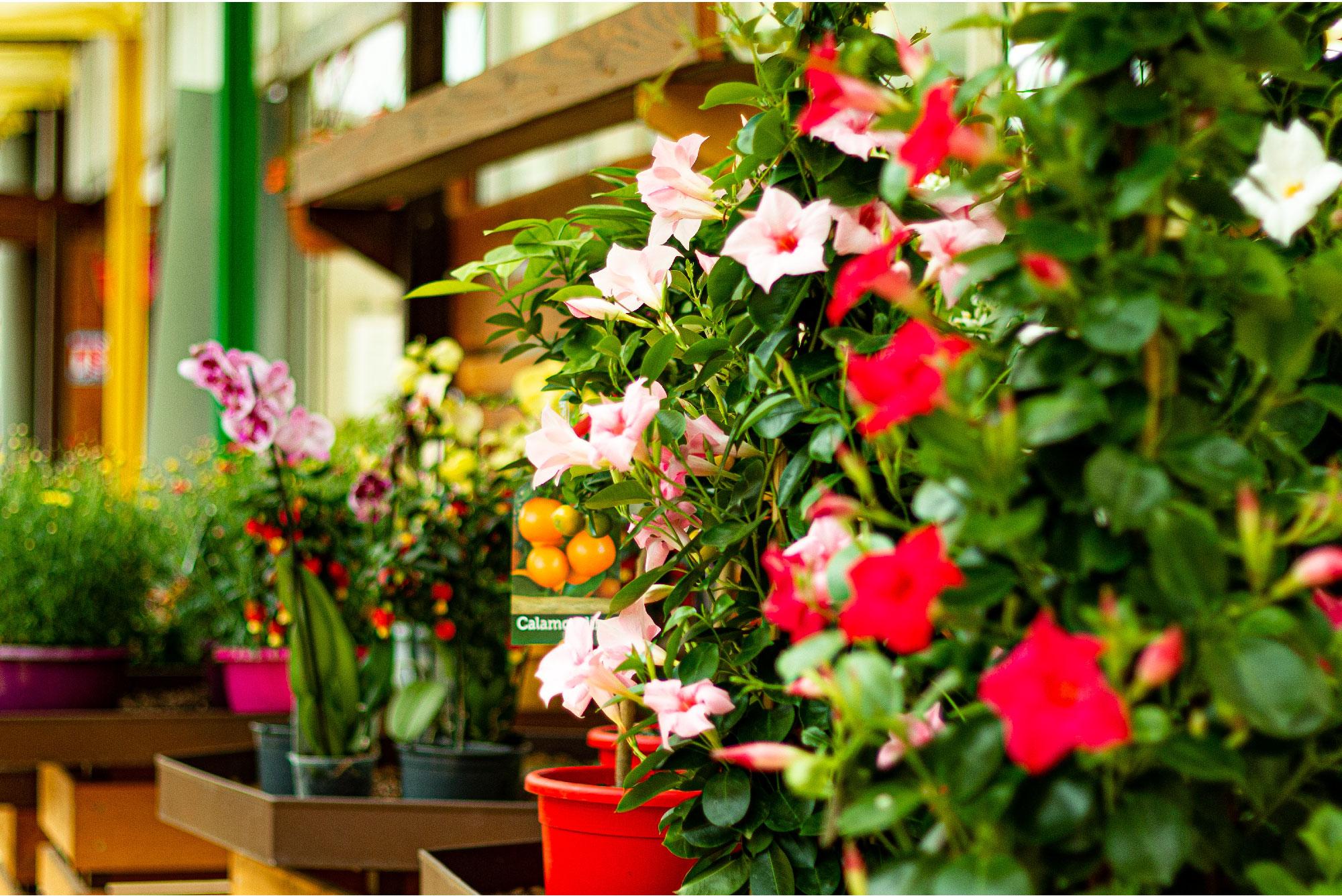 Astuces et conseils de jardinage dans les Cévennes